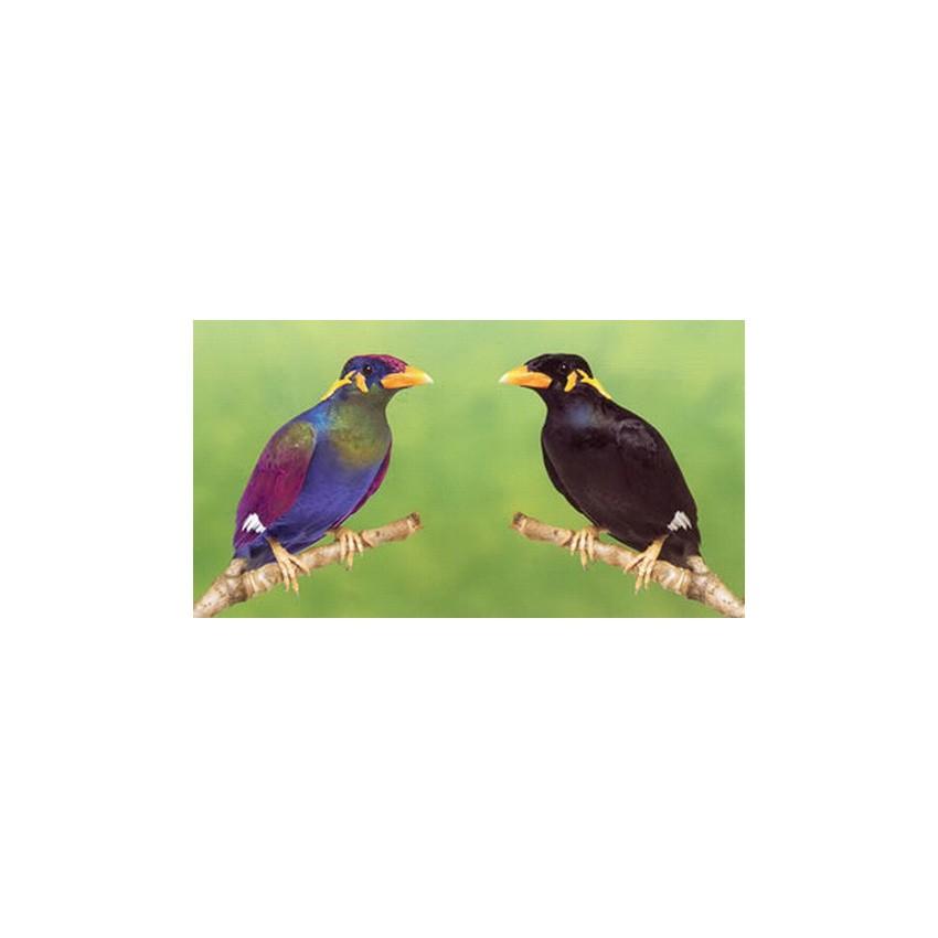 arcadia tube luminoth rapie oiseaux n on lumi re du. Black Bedroom Furniture Sets. Home Design Ideas