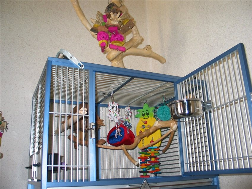 Cage de Transport Perroquet en Aluminium - KING S CAGES TC05   384,00 € 60ce3ba931b5