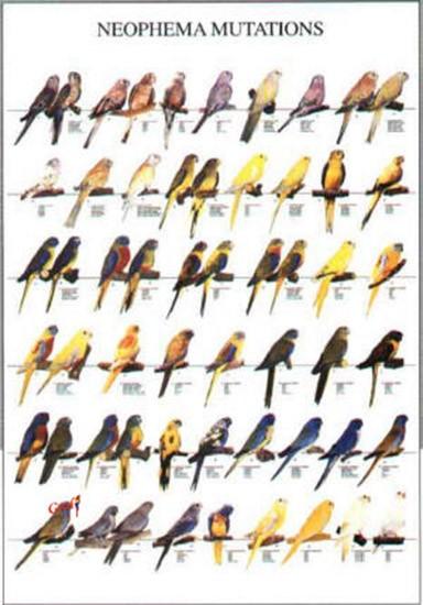 Poster oiseaux les diff rentes esp ces d 39 euph mes 10 00 - Differentes especes de pins ...