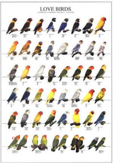 Poster oiseaux les diff rentes esp ces d 39 ins parables n 2 10 00 - Differentes especes de pins ...
