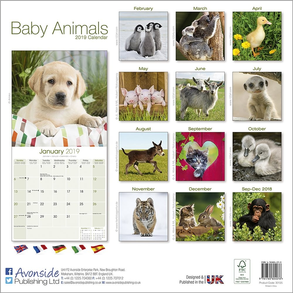 Calendrier Animaux.Calendrier 2019 Les Bebes Animaux
