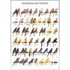 Poster Oiseaux : Les Différentes Espèces d'Euphèmes