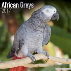 Calendrier 2017 - Les Perroquets Gris du Gabon & Timneh