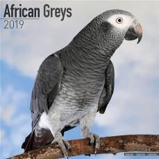 Calendrier 2019 - Les Perroquets Gris du Gabon