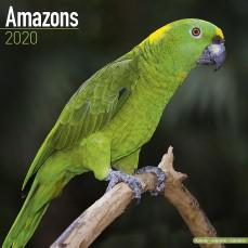 Calendrier 2020 - Les Amazones