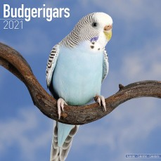 Calendrier 2021 - Les Perruches Ondulées