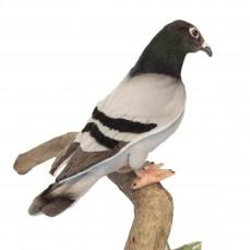 Hansa - Peluche de Collection Pigeon Voyageur - 20 cm