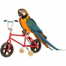 Montana Parrot Bike - Vélo pour Grands Perroquets