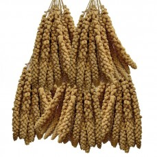 Millet Jaune en Grappes Français (Anjou) - 5 kg