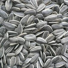 Graines de Tournesol Strié Nettoyé - 2.5 kg