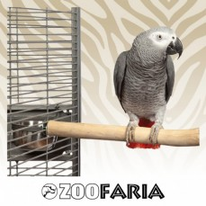 Perchoir en Bois de Java - Medium - Longueur 30 à 35 cm / diamètre 2,5 cm