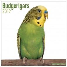Calendrier 2019 - Les Perruches Ondulées