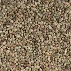 Graines de Chanvre - Détail 1 kg