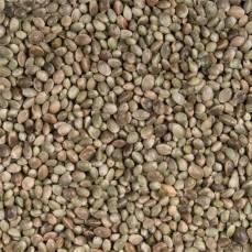 Graines de Chanvre - 15 kg