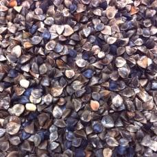 Graines de Sarrasin - Détail 1 kg