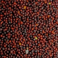 Graines de Navette - Détail 1 kg