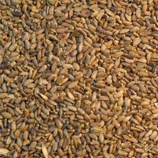 Versele Laga - Graines de Chardon Marie - Détail 1kg
