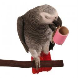 Rouleaux de Carton Small - Lot de 10 - Jouet Oiseaux