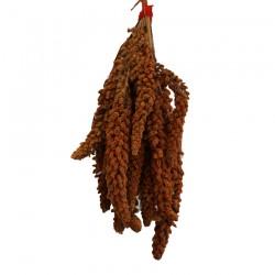 Millet Rouge en Grappes Français (Anjou) - 500 gr