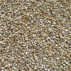 Graines de Millet Japonais Versele Laga au kg