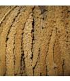 Millet Jaune en Grappes Français (Anjou) - 25 kg