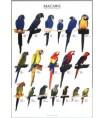 Poster Oiseaux : Les Différentes Espèces de Aras