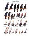 Poster Oiseaux : Les Différentes Espèces de Cacatoès