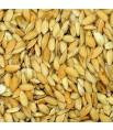Graines de Riz Paddy (Riz Complet) - Vrac 1 kg (conditionné par nos soins)