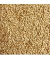 Versele Laga - Graines d'Alpiste - 3 kg