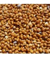 Graines de Millet Rouge - Détail 1 kg