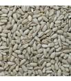 Graines de Tournesol Décortiqué - Détail 1 kg